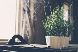 Raumduft Test Qualm vor Pflanze